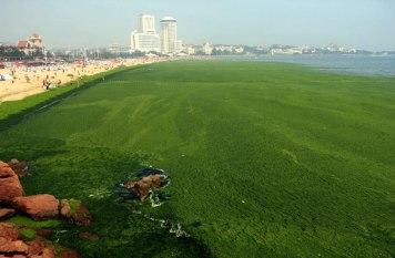 china-algae-3